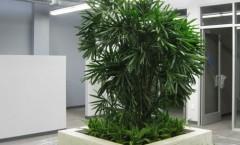 Interior Landscape Installation